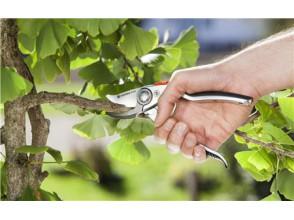 Обрезка деревьев. Какие инструменты лучше использовать?